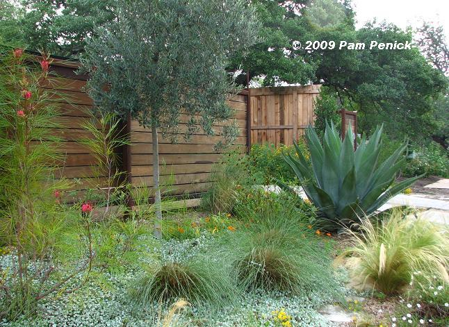 1000 images about australian native landscaping ideas on
