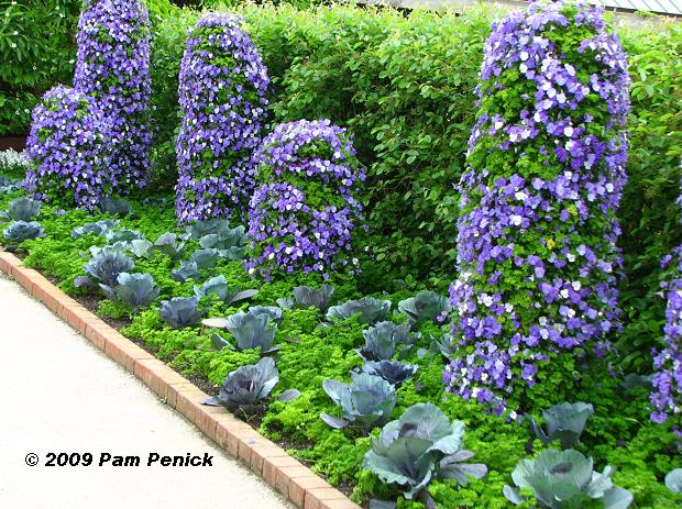 cabbages and pansies chicago botanical garden beautiful
