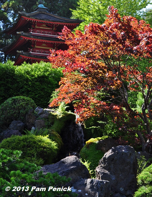 Red Pagoda And Maples In Golden Gate Park's Japanese Tea